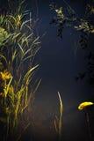 4 subacquei Fotografia Stock Libera da Diritti