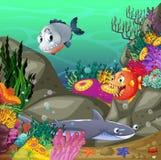 subacqueo Fotografia Stock