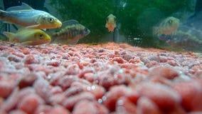 subacqueo Fotografie Stock Libere da Diritti