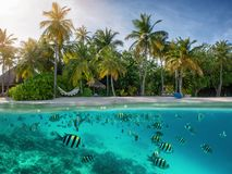 Subacqueo con il pesce variopinto ed i coralli immagine stock libera da diritti