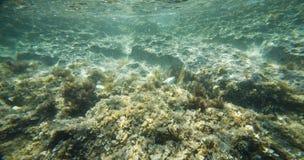 Subacqueo - fondo marino immagini stock