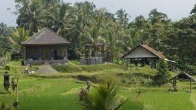 Subak, terrazzi del riso Fotografia Stock