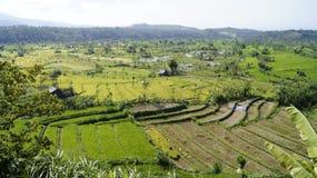 Subak, terrazzi del riso, paesaggio verde Fotografie Stock Libere da Diritti