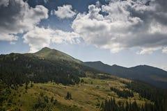 Subalpin äng i de Carpathian bergen Arkivbilder