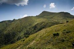 Subalpin äng i de Carpathian bergen Arkivfoton