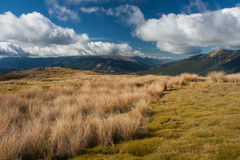 Subalpine pastures in Nelson Lakes National Park. New Zealand Royalty Free Stock Image