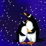 Subantarctic que un par del papuan del pingüino en el cielo de la estrella Vector Imagen de archivo libre de regalías