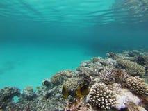 Subaquático Imagem de Stock