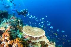 Subaquei su una barriera corallina tropicale Fotografia Stock