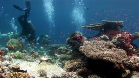 Subaqueo che nuota underwater profondo in barriera corallina archivi video