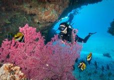 Subaqueo femminile nell'Oceano Indiano, Maldive fotografia stock