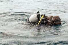 Subaqueo Swimming immagine stock libera da diritti