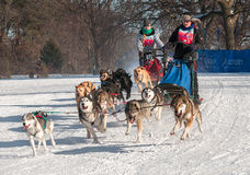 Subaru 2014 Dogsled Loppet - Melissa Domino u. Sherry Johnson Stockbilder