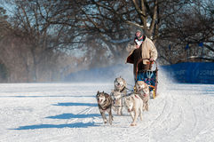 2014 Subaru Dogsled Loppet - Sidney Johnsen Stock Photo