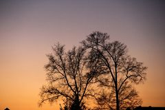 Subdued sunset. Mellow sunset behind dark tree Stock Photography