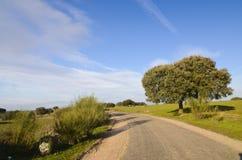 Suber de quercus et une route Photos stock