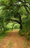 suber quercus дуба пущи португальский Стоковое Фото
