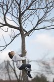 Subida de 10 años de la muchacha en un árbol que mira para arriba Imagenes de archivo