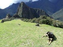Subida de la montaña del picchu de Machu con un perro foto de archivo