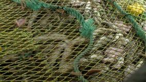 Subida de la red barredera al buque, llena de pescados almacen de metraje de vídeo