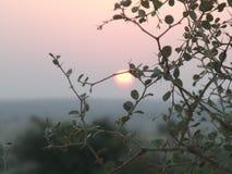 Subida de Sun detrás de una planta de desierto Imagenes de archivo