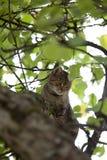Subida del gato alta para arriba en árbol Foto de archivo