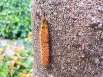 Subida del gusano en el árbol Foto de archivo libre de regalías