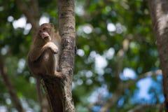 Subida del mono el árbol Foto de archivo libre de regalías