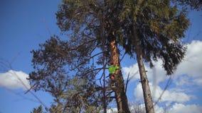 Subidas del escalador un árbol almacen de video