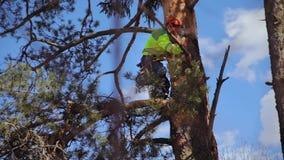 Subidas del escalador un árbol metrajes