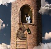 Subidas del gato a su amigo fotografía de archivo libre de regalías