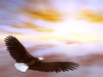 Subir da águia Imagens de Stock