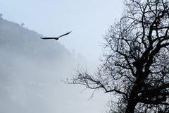 Subir da águia calva Fotografia de Stock