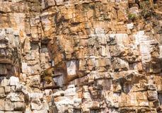 Subir do abutre Foto de Stock