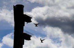 Subir dos pássaros Imagem de Stock
