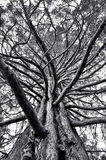 Sublime beauty. When looking up at this tree, I reminded H.R.Giger stock photo