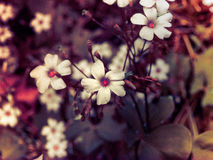 Sublime small white wild flowers Royalty Free Stock Images