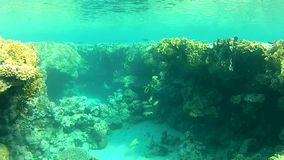 Submarine canyon,  clear water. summer, sea. Snorkeling video at the bottom of the red sea .  Warm and clear water. summer, sea, submarine canyon stock video