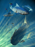 Submarine scene. An U-Boot submarine surrounded by fishes, sharks ans dolphins Royalty Free Stock Photography