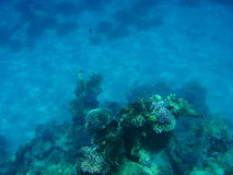 Submarine. View of the sea corals Royalty Free Stock Photography