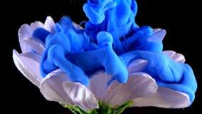 Submarino de la flor blanca con la tinta azul que reacciona y que crea formaciones abstractas de la nube fotografía de archivo libre de regalías
