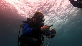 Submarino despredador asombroso del tiburón de las Islas Galápagos en busca de la comida en el fondo del mar metrajes