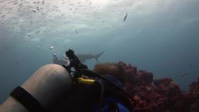 Submarino despredador del martillo del tiburón de Hammerhead en busca de la comida en el fondo del mar metrajes