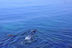 Submarino en el Mar Negro, Rumania Fotos de archivo libres de regalías