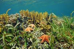 Submarino en un arrecife de coral del Caribe con las estrellas de mar foto de archivo libre de regalías