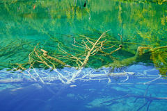 Submerged branches Royalty Free Stock Images