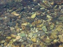 Submerged Coastal Rocks and Flora Stock Image