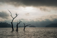 Submerged dead forest at Khao Sok National Park Stock Image