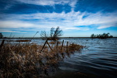 Submerged fenceline. Fence line completely submerged by flood water with a small patch of common reed Stock Photos