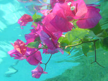 Submerged flowers Royalty Free Stock Photography
